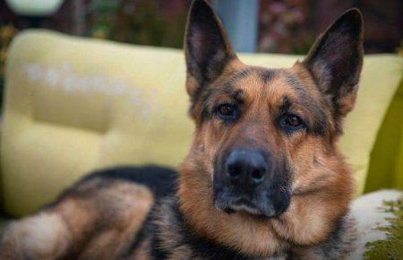 هایکو،بمان! من عاشق زندگی سگی ام!  سمانه احمدی