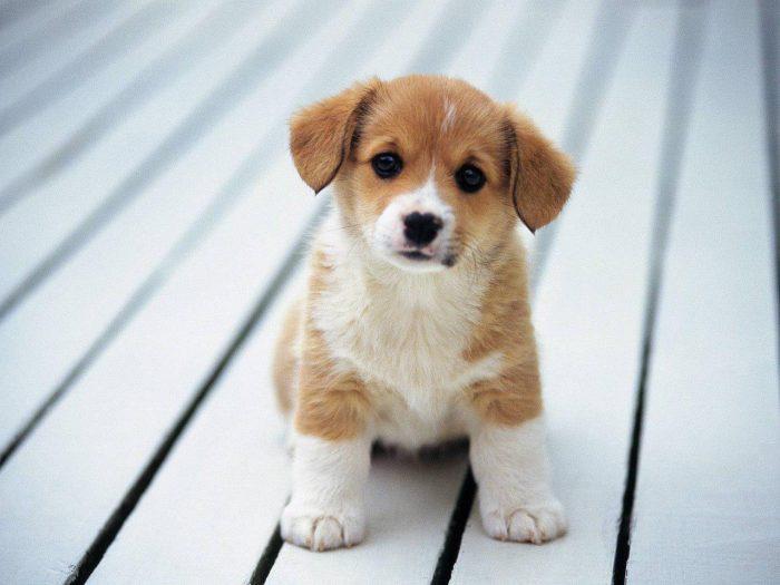 براى اينكه بفهميم چه سگى مناسب خانوادمون هست ،چه فاكتورهايى رو بايد در نظر بگيريم