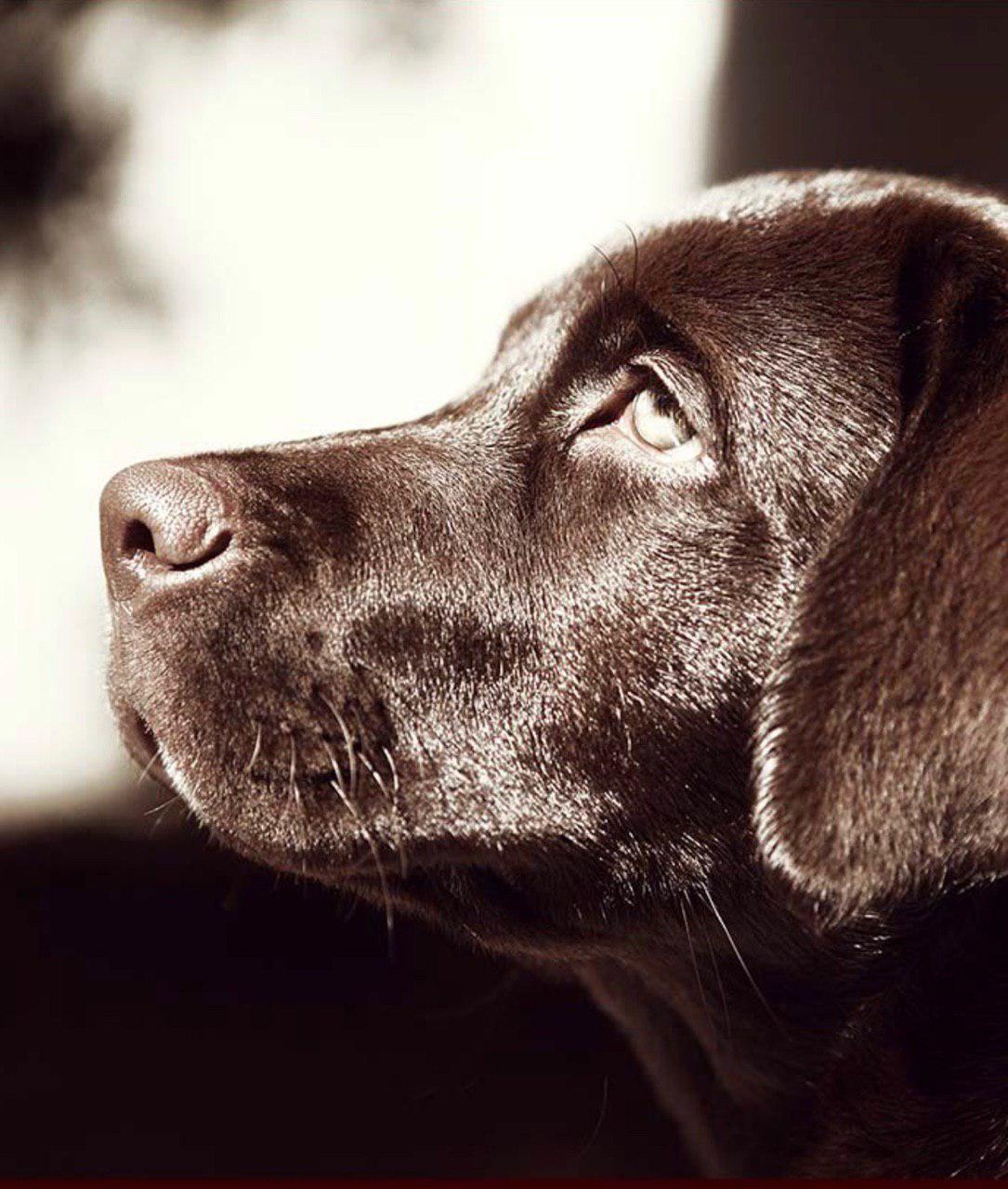 آموزش سگ: نشانه های استرس در سگ ها
