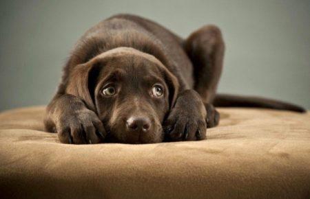 آموزش سگ : علائم استرس در سگ ها